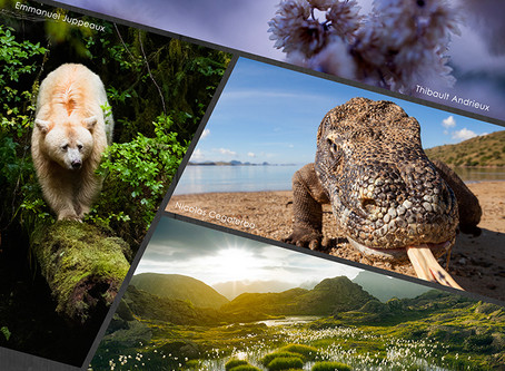Expo Collectif Esprit Nature