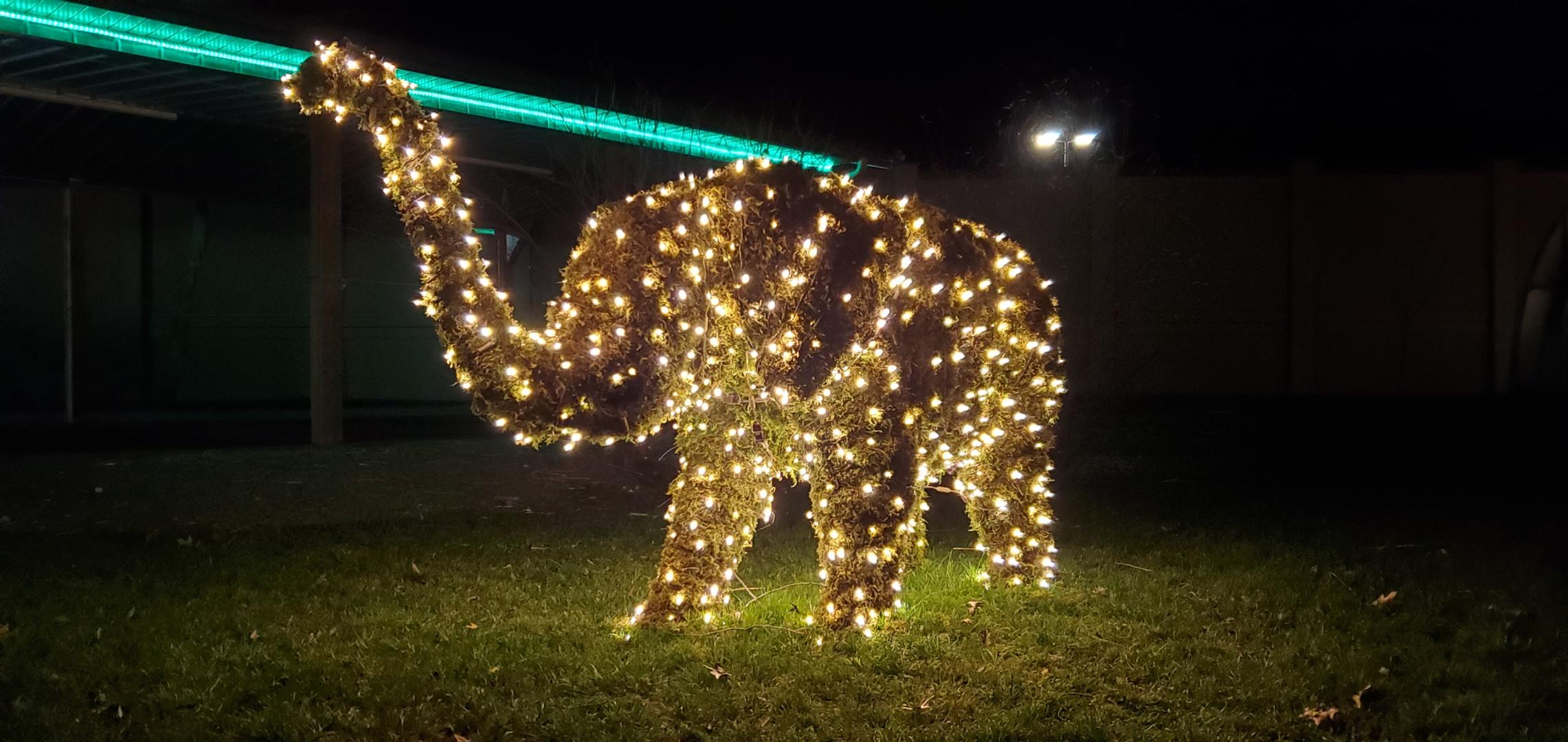 Elephant Lights