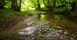forest river stream