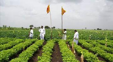 Food grown on farm - India