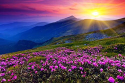 sunset flowers hill