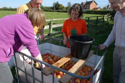 Washing the Fruit