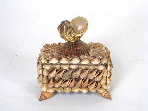 Delicate Shell Box