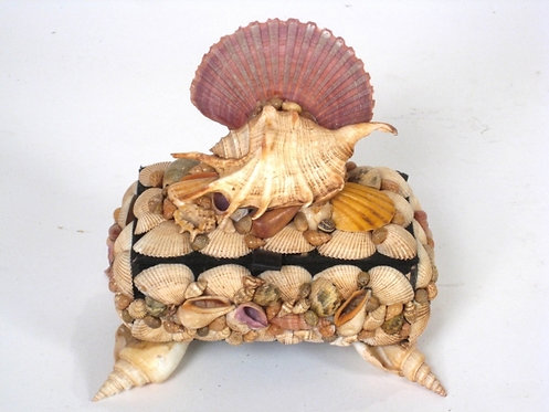 Shell Box With Conch Crown