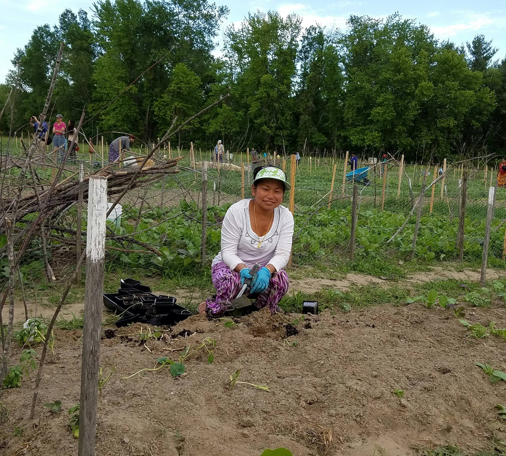 Chandra planting