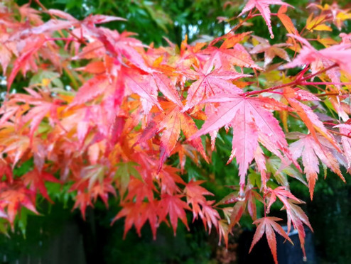 Nature photography - leaves