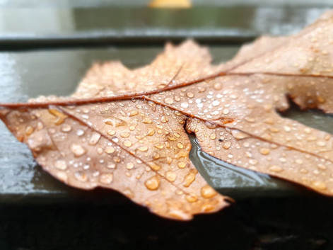 Photo of autumn leaf
