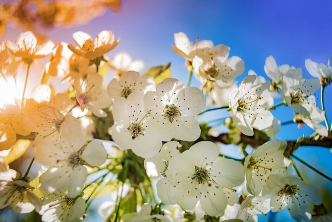 Apple Blossom Seasonal Facial