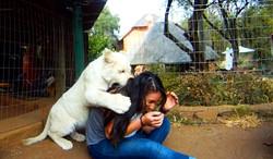 White Lion Cub bitting me