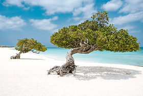 ARUBA Spiaggia