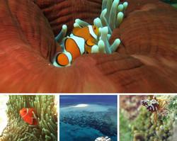 Grande-Barriera-Corallina