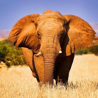 namibia-safari-usp.jpg