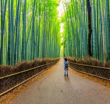 giappone arashiyama.jpg
