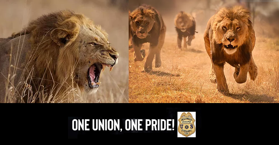 one-union-one-pride-logo.PNG
