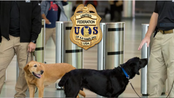United Federation of K9 Handlers Merge with United Federation LEOS-PBA