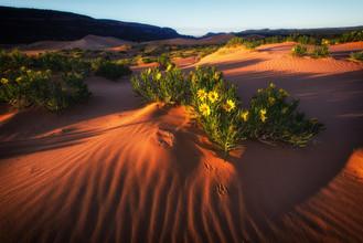 Vanishing Dune