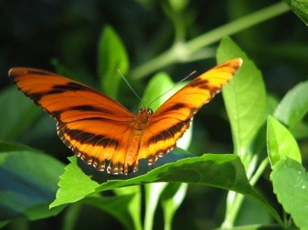 La chrysalide et le papillon