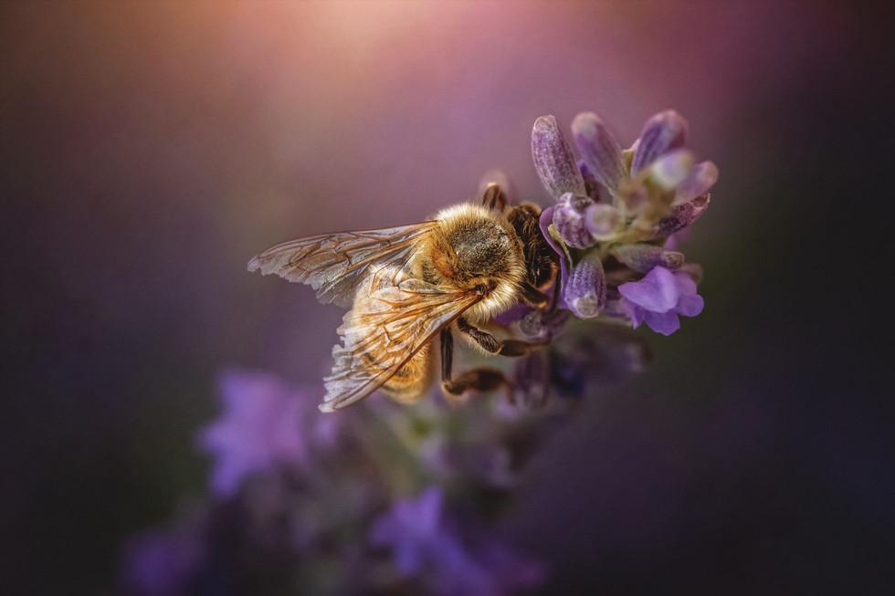 July Bee 4.jpg