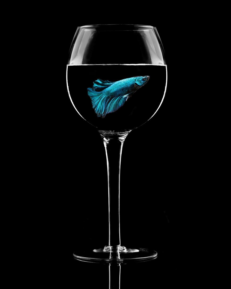 Blue in a Glass.jpg