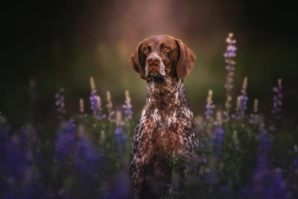 Brit Purple Flowers.jpg