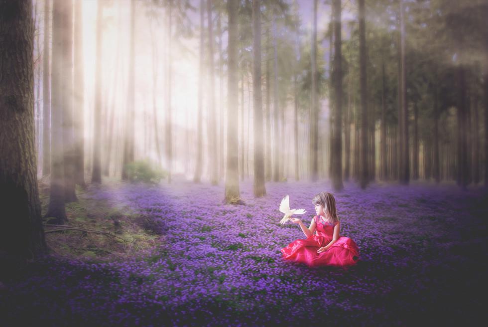 Red Princess Violet Forest.jpg