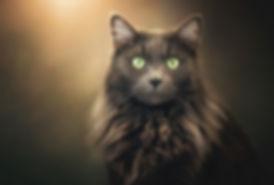 Tasha Portrait.jpg