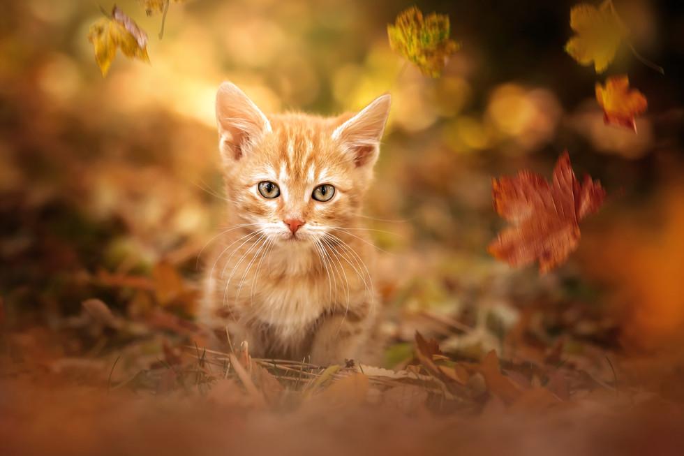 Mr. Kitty in Fall.jpg