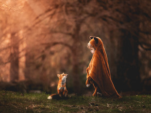 Once Upon a Fox Tale