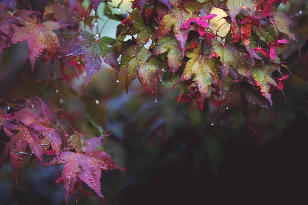 water leaves.jpg