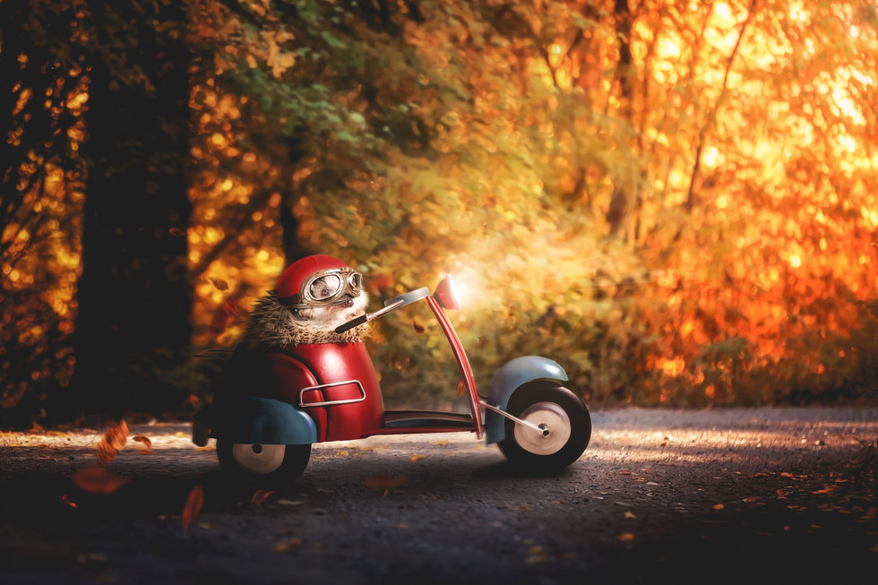 Road Hog.jpg