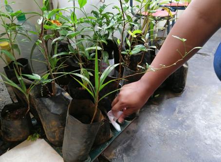 Dons de plantes aux écoles du sud