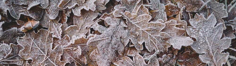 Koti Lifestyle | Winter skincare, frosty leaves