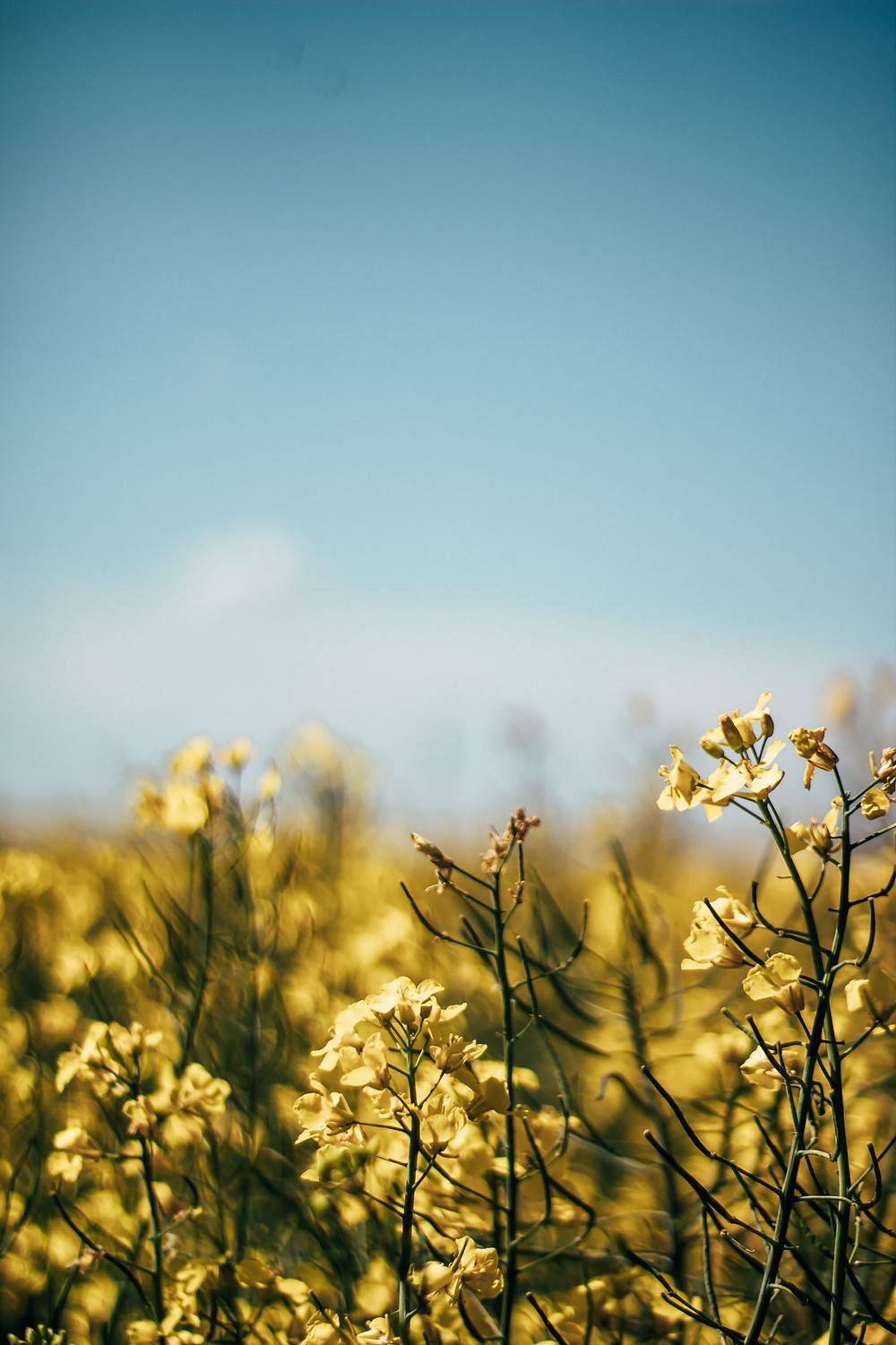 Koti Lifestyle | yellow flowers on a field, how to reduce chemical load