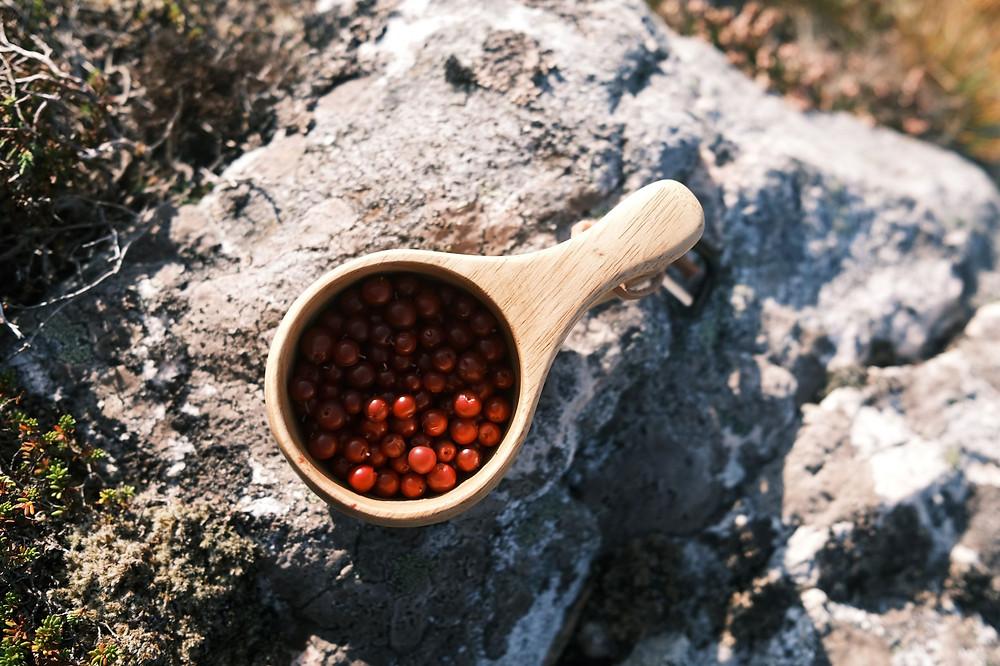 Koti Lifestyle | Finnish beauty ingredient Arctic lingonberry