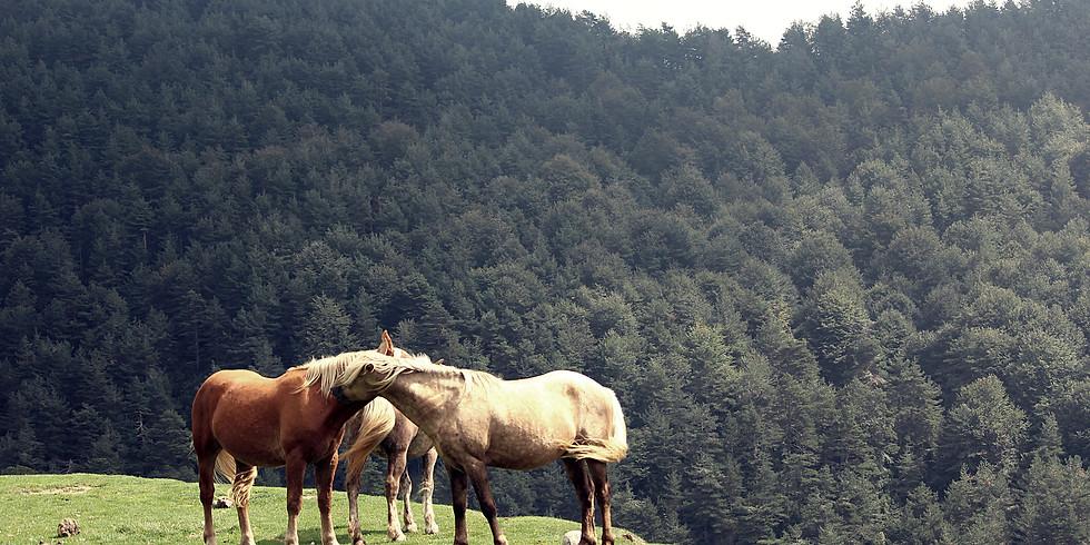 LIFE AMONG FREE HORSES