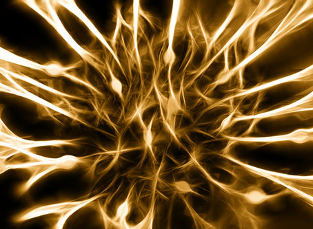 Stress, Gut Feelings, Emotional Bonding and Orgasms: The Wandering Vagus Nerve has it all.