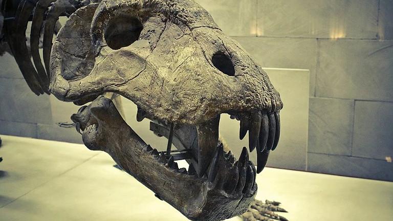Палеонтологический музей | В гости к динозаврам