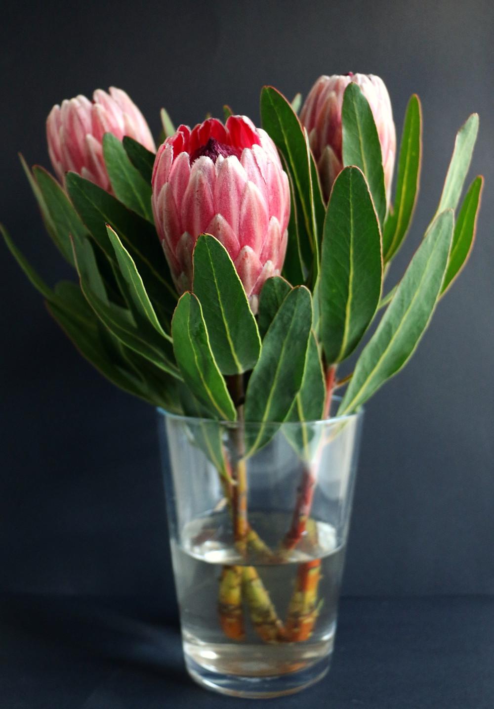 proteas en florero