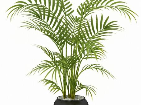6 Plantas Que Oxigenan Espacios