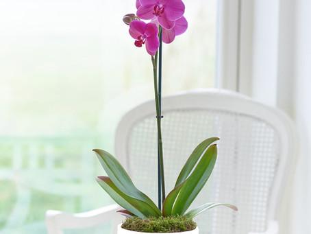5 Flores para el hogar que atraen energías positivas