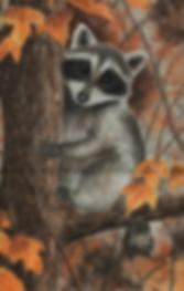 raccoon.TIF