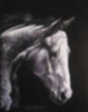 gray black horse.JPG