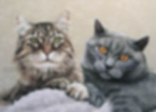 companioncats.JPG