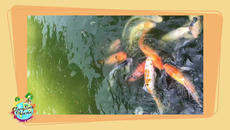 Quiet Space gives children the chance to relax and reflect. (no sound)  In this episode of Quiet space, a  school of fish friends swim and swish as they eat.