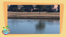 Quiet Space gives children a chance to relax and reflect  (no sound).  In this episode of Quiet Space, a duck family takes a dip on a beautiful day.