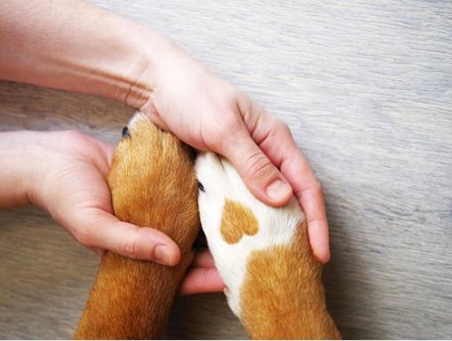 Séance de leethérapie animale