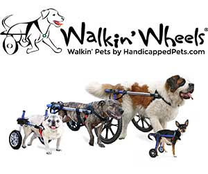 walkin-wheels-all.jpg