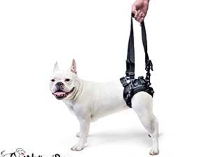 Walkin Rear-Lift Harness XL