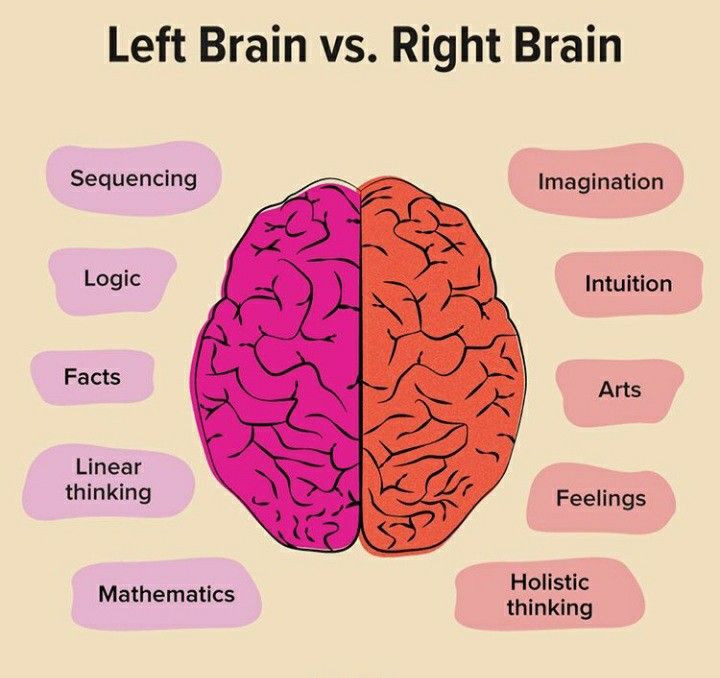 The two sides of your brain may look alike, but there's a big difference in how they process information. Here's what left brain vs. right brain means for you.vs. left side against yellow background