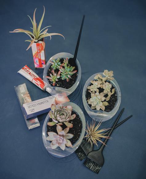 Wella Color + Plants